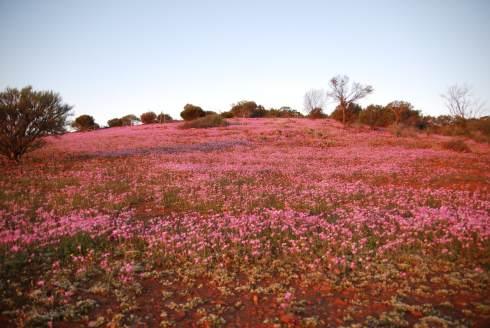 farm wildflowers